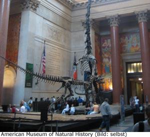 Natur Museum New-York Manhattan